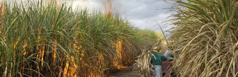 Les feux agricoles de 4 pays d'Afrique produisent 27 fois plus de CO2 que toute la France